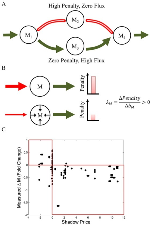 In a constraint-based method that integrates gene expression (GIMME/TEAM), shadow prices predict the direction of changes in metabolite abundance.(A) Schematic of the GIMME/TEAM algorithm. Enzymes whose constituent genes show very low expression (red) are penalized. Then, a flux distribution is identified with the lowest total penalty (in this case, the alternative pathway with high expression, colored in green). (B) Schematic of the interpretation of shadow prices in TEAM. Consider a situation in which, at steady-state, a reaction with low gene expression (red, high penalty) is inferred by the model to carry a high flux, leading to a high penalty. When the metabolite is allowed to deviate from steady-state by lowering the flux through the highly penalized reaction, the penalty predicted by TEAM falls. The shadow price λM for this metabolite, whose concentration is predicted to be decreasing, is thus positive. (C) Shadow prices predicted by TEAM and observed changes in metabolite abundance are significantly negatively correlated. A threshold of θ = 0.88 was used, although other values of θ yielded similar results (SI Figure S1). Changes in metabolite abundance were calculated using measurements between hours 10 and 11 in [33] where acetate was observed to be secreted from the cell [32]. Expression data used as input to TEAM is taken from hour 35 of [32]. Both time points correspond to the same phase in the metabolic cycle of yeast, during the end of the oxidative and beginning of the reductive/building phase.