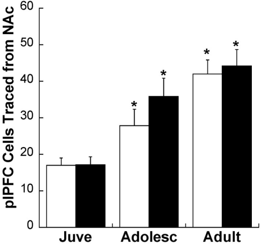 Density of traced cells per mm2 in the plPFC of CON (white bars) and MS (black bars) rats at three ages. * p < 0.05 difference from juveniles within the same stress group. Averages ± SEM are presented.