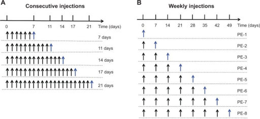 Time schedule for the experiment.Notes: (A) The consecutive injections of PE group, n days represent the nth-day PE injection. (B) The weekly injections of PE group, PE-n represents the nth-week PE injection. Black arrows indicate the injection of the blank PE, and blue arrows indicate the injection of PE.Abbreviations: PE, PEGylated emulsion; PEG, polyethylene glycol.