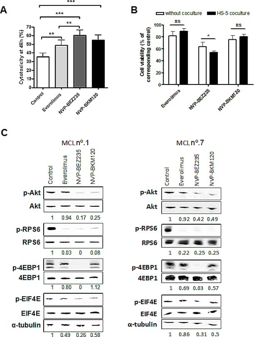 Cytotoxic effect of everolimus, NVP-BEZ235 and NVP-BKM120 and PI3K/Akt/mTOR signaling inhibition in primary MCL cellsA, Primary MCL cells were treated with 5 μM everolimus, 1 μM NVP-BEZ235 or 1 μM NVP-BKM120 for 48 hours and cytotoxicity was measured by Annexin V labeling. Mean ± SEM of all the samples analyzed (n=11). B, Primary MCL cells (n=9) were cocultured with or without HS-5 and incubated with the corresponding drugs as above. Cell viability was assessed by Annexin V labeling at 48 hours and calculated relative to the respective untreated control, with or without stroma. Mean ± SEM of the cases analyzed. C, MCL cells were exposed for 8 hours to the corresponding drugs as previously. Analysis of phosphorylated and total levels of Akt, RPS6, 4EBP1 and EIF4E were determined by Western blot. Ratio between phosphorylated and total protein levels was calculated and relative protein quantification in treated versus control extracts was conducted with Image Gauge software (Fujifilm). α-tubulin was probed as a loading control. Two representative cases are shown (MCL nº.1 and nº.7). *, P < 0.05; **, P < 0.01; ***, P < 0.001; ns, not significant.