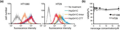 Cellular uptake of the protein nanocages in vitro. (a) Representative histograms of the fluorescence intensities of HT1080 and HT29 cells incubated with fluorophore-labeled nanocages in the presence of 10% fetal bovine serum for 3 h; (b) Cytotoxicity of HspG41C-CTT in HT1080 and HT29 cells. Data are presented as the mean ± standard error of the mean of three independent experiments.