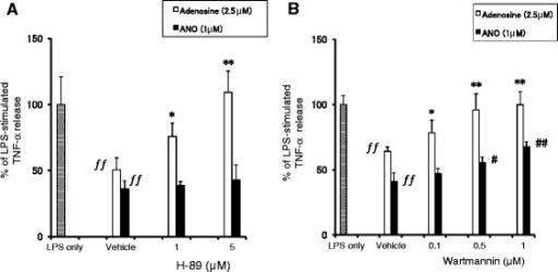 Effect of H-89 or Wartmannin on ANO-induced inhibition of TNF-α production. Peritoneal macrophages were incubated with various concentrations of H-89 (A) or Wartmannin (B) for 30 min before stimulation with LPS (2 μg/mL) in the presence of absence of ANO (1 μM) or adenosine (2.5 μM). After 24 h, levels of TNF-α in the culture supernatants were determined by ELISA. Values represent the means ± S.D. of quadruplicate cultures. Results are expressed as the percentage of TNF-α released from macrophages in response to LPS and are representative of two separate experiments with similar results. ƒƒ, p < 0.01, significantly different when compared with LPS stimulation in the absence of adenosine or ANO. *p < 0.05; **p < 0.01, significantly different when compared with vehicle control culture in the presence of adenosine. #, p < 0.05; ##, p < 0.01, significantly different when compared with vehicle control culture in the presence of ANO.
