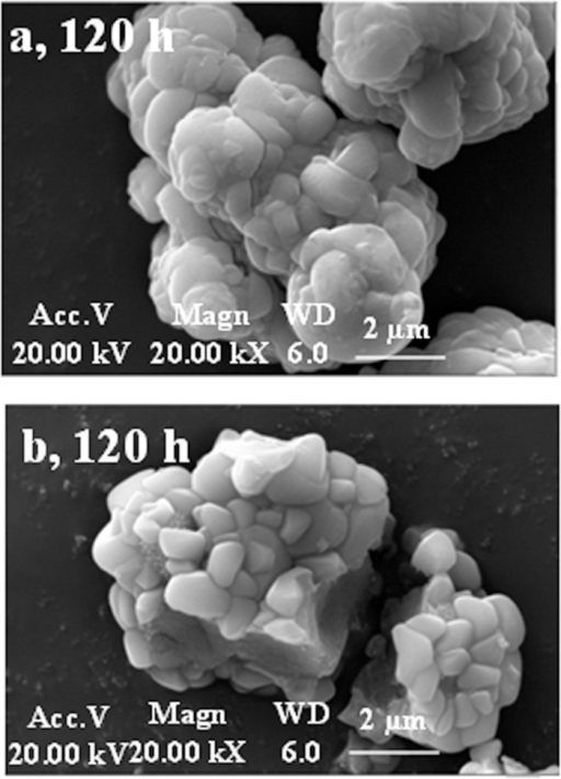 SEM images of Fe-precipitates formed at 48 h sealed (a) and unsealed reaction solutions (b).