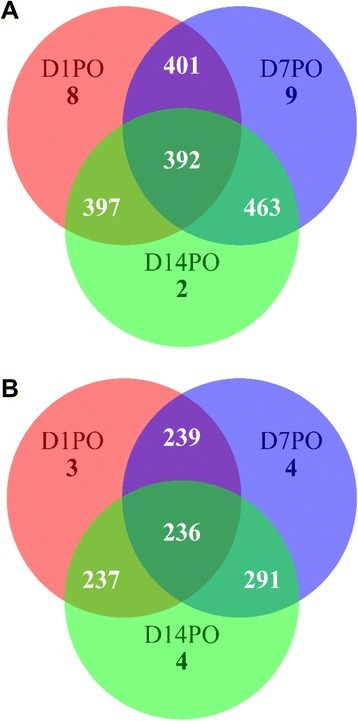 Three way Venn diagrams showing the number of miRNAs among D1PO, D7PO and D14PO eggs. (A). Known miRNAs identified. (B). Novel miRNAs predicted. D1PO, D7PO, and D14PO are day 1, 7, and 14 post-ovulatory eggs, respectively.