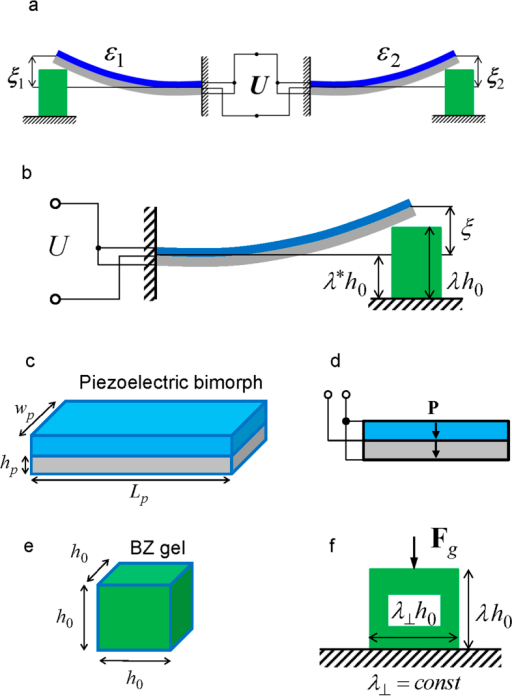Electrically coupled piezoelectric MEMS actuated by self-oscillating polymer gels.(a) Two gel-piezoelectric units coupled through the parallel electric connection. (b) The deflection of piezoelectric cantilever ξ and the electric potential difference U caused by the swollen gel having the degree of swelling λ. (c) The piezoelectric cantilever consists of two layers having the length Lp, width wp, and layer thickness hp. (d) The cantilever is fabricated from a polarized piezoelectric material (polarization P); the internal and external surface electrodes are connected in parallel. (e) An un-deformed gel is cube-shaped of size h0. (f) The gel swelling takes place under the action of force Fg, and is restricted to uniaxial deformations characterized by the variable longitudinal and constant transversal degrees of swelling λ and λ⊥, respectively. In calculations, the dimensions are taken to be h0 = 0.5 mm, Lp = wp = 1 mm, hp = 10 μm. The used values λ* and λ⊥ are discussed in the SI.
