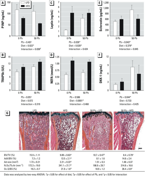Effects of HFD and Pb (50 ppm) on histologic and serum bone parameters; Pb-exposed and control mice were placed on LFD or HFD for 6 weeks. Serum bone formation marker P1NP (A), resorption marker TRAP5b (B), leptin (C), NEFA (D), sclerostin (E), and DKK1 (F) were measured using ELISA methods. Data are mean ± SEM of 5 mice/group. (G) Trabecular bone in the proximal tibia was assessed histologically by Alcian blue hematoxylin/orange G staining (bar = 100 μm); images are representative sections from treatment groups, selected for approximation to the median BV/TV of its group. Abbreviations: AdV/BV, adipocyte volume/bone volume; Ad size, adipocyte size; BV/TV, bone volume/ total tissue volume; N.Oc/Tb.Ar, number of osteoclasts/trabecular bone area; Oc.S/BS, osteoclast surface/bone surface. The effects of Pb and/or HFD on osteoclast and adipogenic parameters were calculated and are presented at the bottom of each image. Data represent mean ± SEM for 3 mice/group.*p < 0.05 for effect of Pb or diet. #p < 0.05 for interaction of Pb and diet.