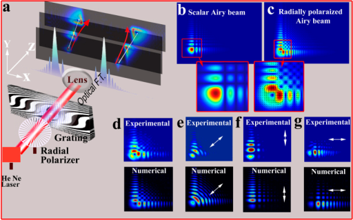 Generating radially polarized self-accelerating vector beams.(a) A radially polarized He-Ne laser beam is diffracted from a binary modulated cubic phase mask. Then, it is optically Fourier transformed and recorded at the focal plane and beyond. As illustrated, the radial polarization singularity (white line) and the highest intensity lobe (red line) propagate along different trajectories. (b,c) Comparison between the numerically calculated diffraction patterns of the known scalar Airy beam and the radially polarized Airy beam at the focal plane. As can be seen, the main intensity lobe is imprinted with radial polarization singularity. (d–h) Experimental and numerical results of radially polarized Airy vector beams after applying a polarizer. Polarization direction is denoted by the white arrow (un-polarized, 45° polarized, x polarized, y polarized, respectively).